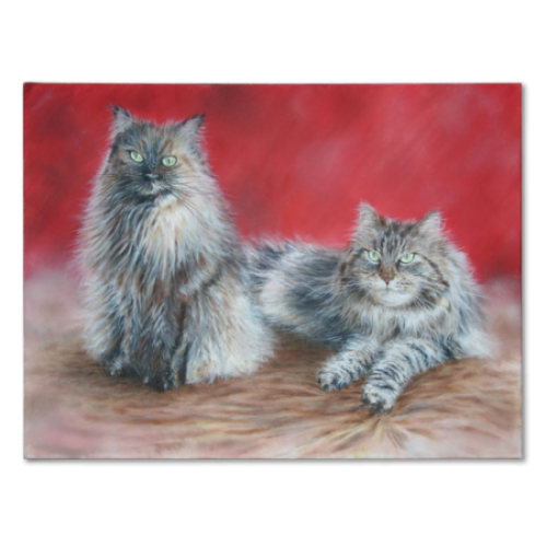maine_coon_georgie_rozee_front